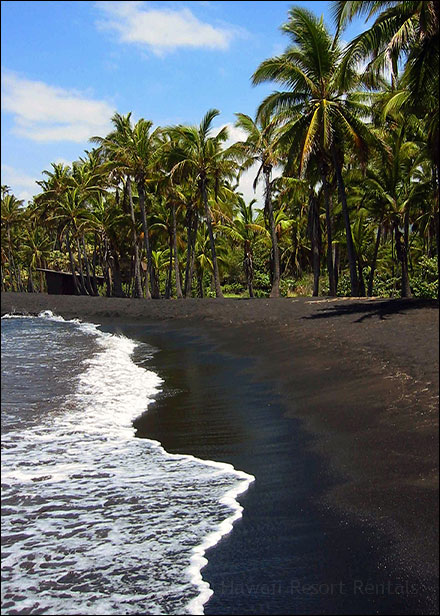 Punalu'u Beach, black lava sand beach with jungle vegetation and palms on the right