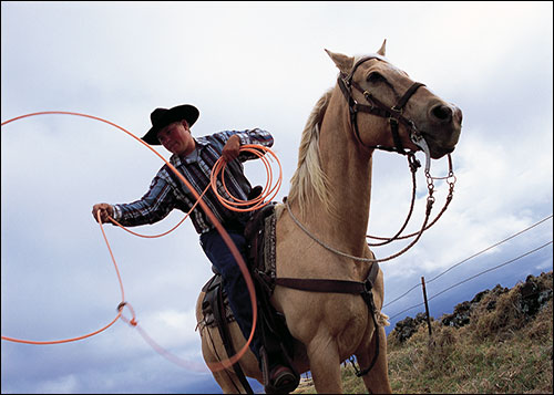 Horseback cowboy with lasso at Parker Cattle Ranch