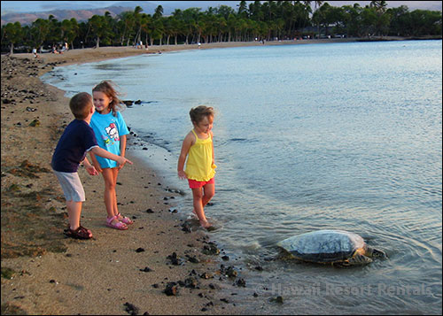 A Bay in Waikoloa Beach Resort with 3 children and a sea turtle on a sandy beach with a few lava rocks