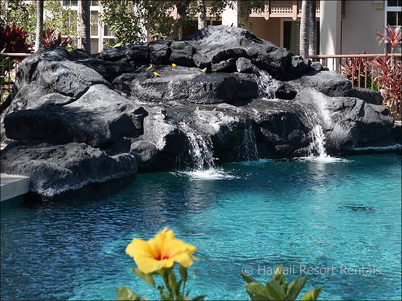 Plants Around Above Ground Pool Landscaping