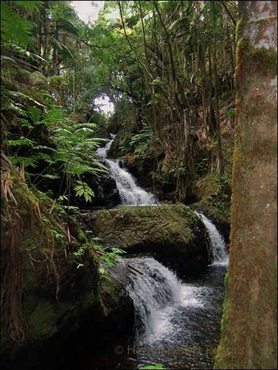 Lush tropical rain forest with waterfalls